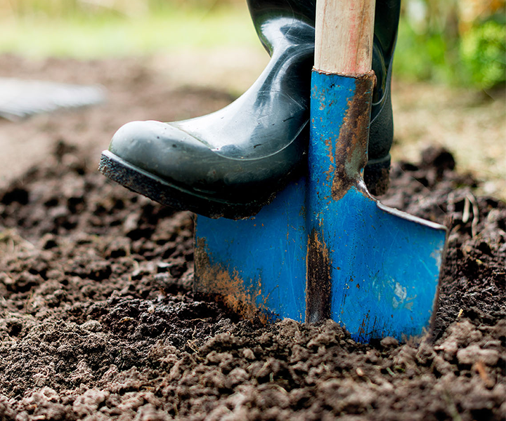 A foot in a wellington boot digging in soil with a spade